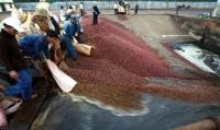 Không xây thêm nhà máy chế biến cà phê trong giai đoạn 2020-2030